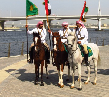 Horses in Dubai
