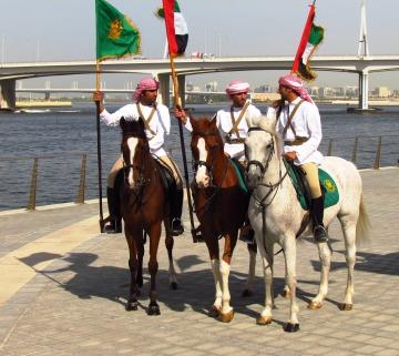 Horses in Dubai