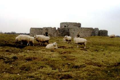 Sheep and Castle