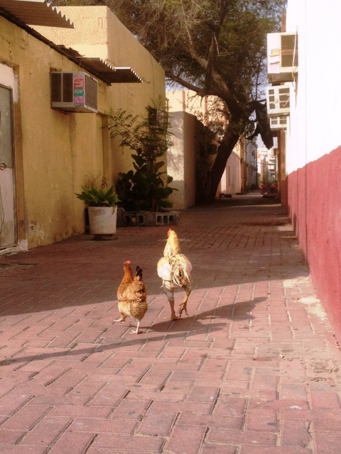Satwa chickens